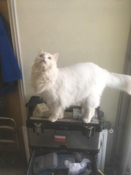 Kat klant